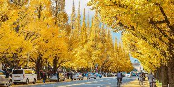 Những địa điểm bạn nên đi trong mùa thu tại Nhật Bản