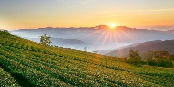 8 đồi chè tuyệt đẹp để 'sống ảo' tuyệt đẹp mà bạn nên biết