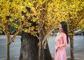 Phố hoa xuân Phạm Ngọc Thạch được giới trẻ đổ xô đến check-in trong dịp cận tết