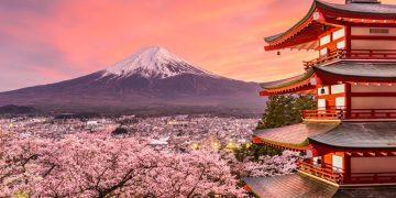Cách người Nhật dự đoán hoa anh đào nở mà bạn không ngờ tới