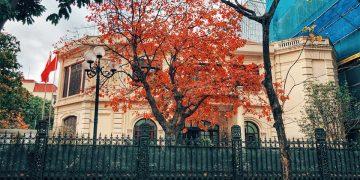 Hà Nội đẹp ngỡ ngàng, tựa trời Âu mùa cây thay lá