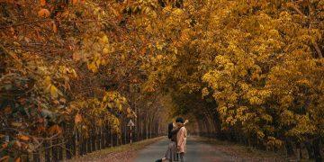 Sống ảo cùng rừng cao su lá vàng đẹp như Hàn Quốc cách Sài Gòn chỉ 60km