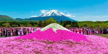 Tháng 5, đến Nhật tham gia 5 lễ hội hoa tương trưng cho 'tình yêu'