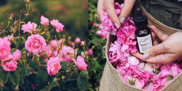 Người yêu thích hoa hồng, không nên bỏ lỡ Isparta
