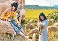 Đến đồng cừu Ninh Thuận để có bộ ảnh trên thảo nguyên độc lạ