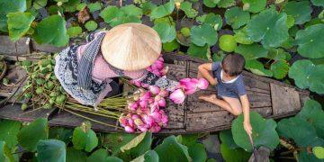 Những cánh đồng sen đẹp nhất Việt Nam