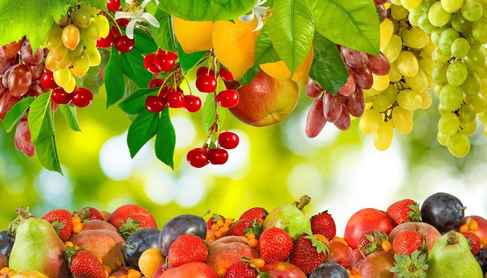 Trải nghiệm du lịch và hái trái cây ở Nhật Bản: Những điều cần lưu ý