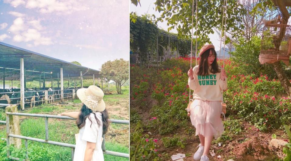 Trại bò sữa nhiều góc check-in tuyệt đẹp ở Mộc Châu thu hút giới trẻ