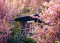 Những Homestay đẹp mê ly tại Đà Lạt