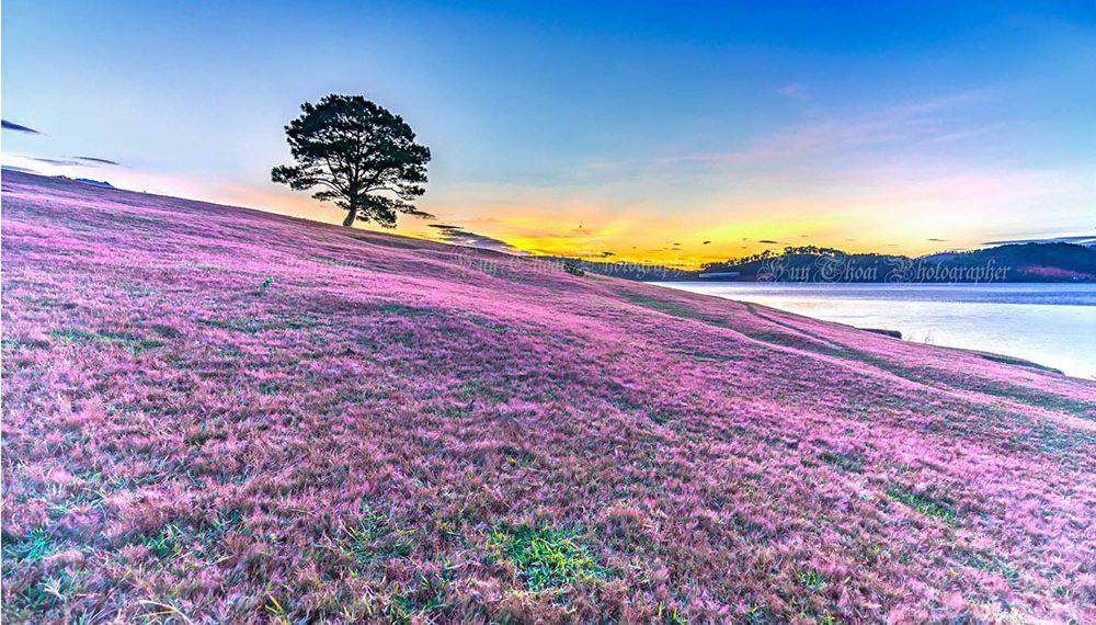 Đà Lạt tháng 11 sẽ có những mùa hoa nào? Gợi ý mùa hoa Đà Lạt dịp cuối năm