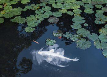 Bộ ảnh Nhật Bản tuyệt đẹp trong 4 mùa
