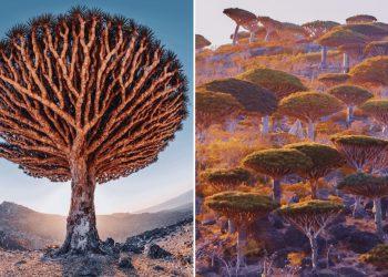 Vẻ đẹp ngoài hành tinh của đảo cây huyết rồng